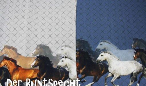 Bordüren Baumwolljersey Pferdegalopp