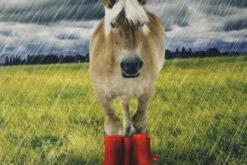 Paneel-Jersey -Pferd im Regen