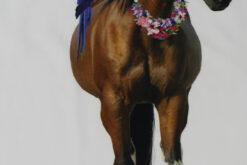 Paneel Jersey - Honululu Horse weiß stehend