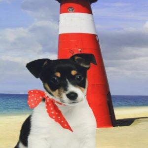 Paneel Jersey - Jack vor dem Leuchtturm